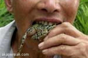 یک میلیارد قورباغه در سال غذای انسان ها می شود
