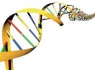 چه ژن هایی از پدر و مادر به فرزندان ارث می رسد؟