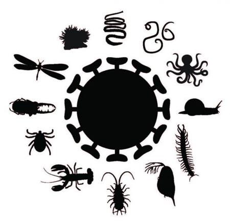 ویروس های کشف شده بیماری زا