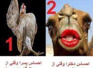 تفاوت های خنده دار بین دخترها و پسرها